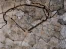 schiele-copac-toamna-descompunere-130x98 Schiele, Egon